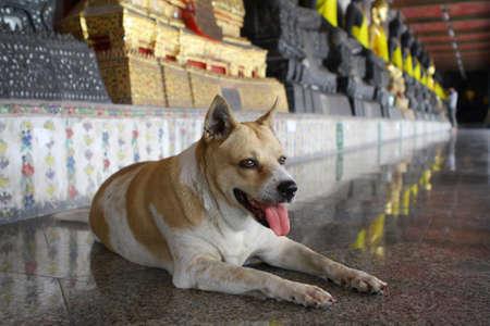 canny: The dog at Wat Suthat Thepwararam in Bangkok