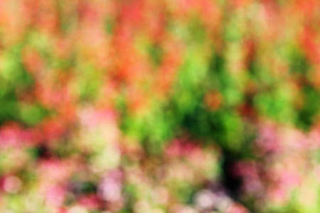deliberately: Background bokeh with colourful. By deliberately shooting flowers out of focus Stock Photo