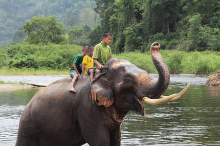 mahout: Unidentified many children riding on elephant in the forest at Kanchanaburi province in Thailand on May 24, 2015,