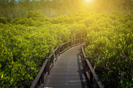 Abstract background of walkway among the ceriops tagal is a beautiful nature in the mangrove forest at Thailand.Traveling and journey Concept
