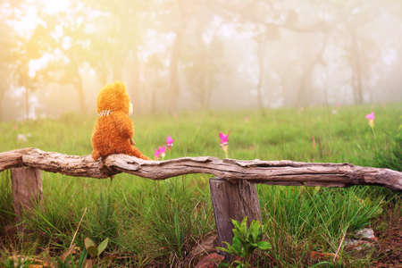Lonely teddy bear sits on timber in Siam tulip field among the cold and fog in the morning at Chaiyaphum province in Thailand is a very popular for photographers and tourists.