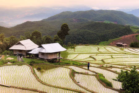 Beautiful scenery of the Pa Pong Piang rice terraces(paddy field) in the morning time at Mae-Jam,Chaingmai Province in Thailand.This location is very popular for photographers and tourists.