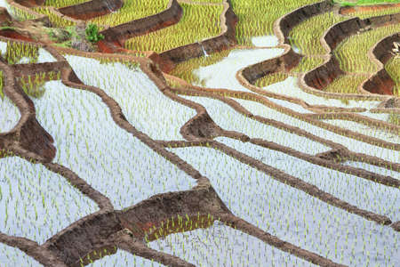Natural background of rice terraces (paddy field)