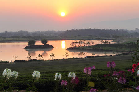 Natural  background of beautiful landscape in the sunrise time at tea plantation ,Chiang Rai province in Thailand Stock Photo