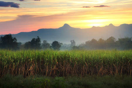 Natural scenery of sugar cane field and mountain during sunrise at Kanchanaburi province in Thailand