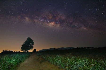 Milky way and many stars on night sky at pineapple plant field in Thailand. Stock Photo