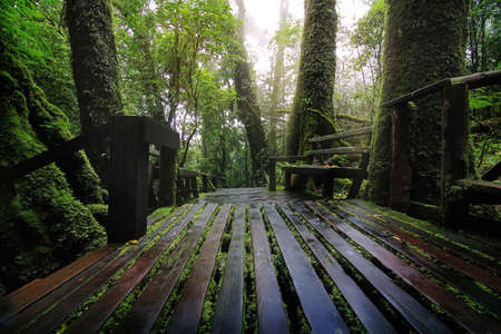 Beautiful rain forest at nature trails Ang Ka Doi Inthanon,Chiangmai in Thailand is a very popular for photographer and tourists. Natural and Travel Concept. Stock Photo