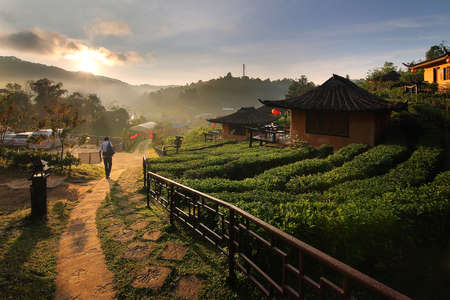 Beautiful scenery during sunrise at Chinese style village among Tea Plantation at Ban Rak Thai , Mae Hong Son in Thailand.This is a very popular for photographers and tourists. Attractions and natural Concept Stock Photo