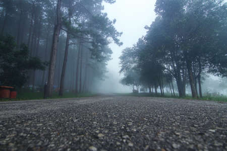 Natural background of empty route and journey amidst the pine forest and misty in rainy season at Phu Hin Rong Kla national park, Pitsanulok province in Thailand.