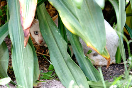 White cat try to hide behind the plants long leaf
