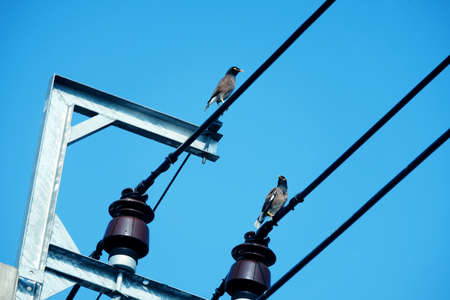 Two pigeon birds stand on electric cable wires with cleary blue sky, horizontal shot