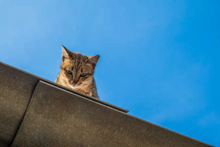 Funny Cat Pictures, Cat sitting on the roof and Looking
