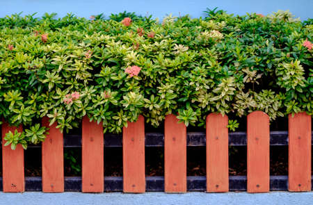 Orange color wooden fence and Ixora plants Stock Photo