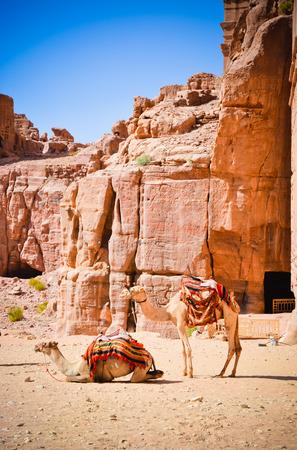 Cemels Scenic Jordan Stock Photo