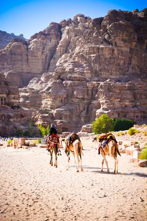 Camels Jordan