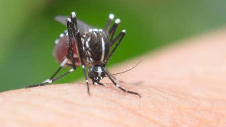 mosquito, malaria, influenza Stock Photo