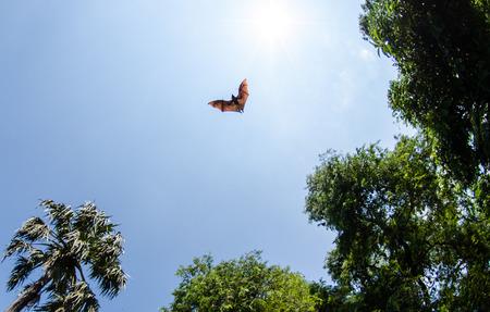animal vein: Bats in flight Stock Photo