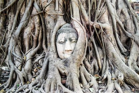 cabeza de buda: Buda cabeza en las ra�ces del �rbol