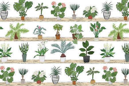 home plants vector graphic hand drawing pattern
