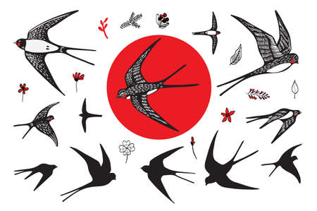 japanese swallow vector hand drawing graphic set