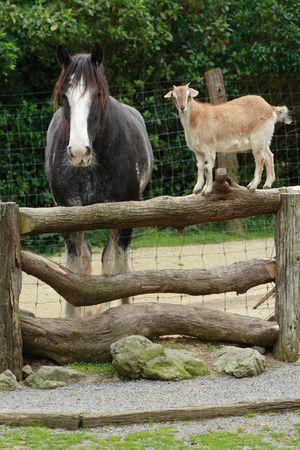 flink: Das Pferd und die Ziege