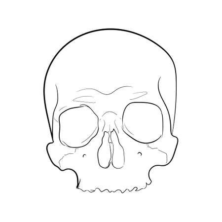 Vector of Skull hand drawing Illustration Black and White