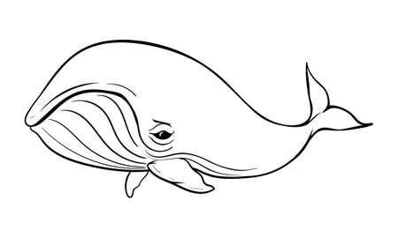 vector illustration of a humpback whale on white background with black outline for kids and coloring book Ilustracja
