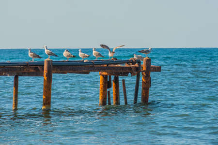 Seagulls sat on top of an old rusty dock in anapa. that had fallen into disrepair. Their white feathers create a great contrast to the dark blue sea water around them. Zdjęcie Seryjne