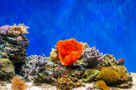red sea coral reef with hard corals, fishes and sunny sky shining through clean water - underwater photo. Banco de Imagens