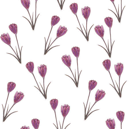 seamless watercolor pattern with lilac saffron flowers on a white background. for fabric, paper, postcards, holiday, wedding decoration. Standard-Bild
