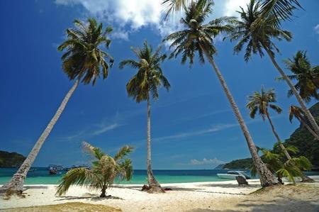 Row of coconut on the beach,Angthong National Park, Thailand