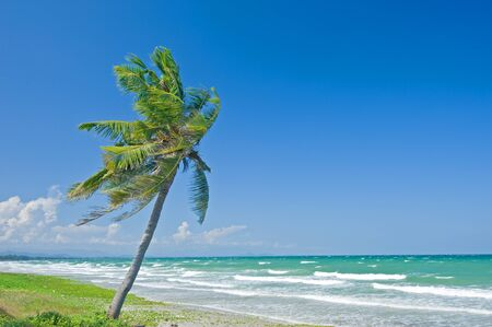 Coconut tree on the beach photo