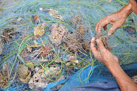 hardened: Fisherman take marine animal out of a net