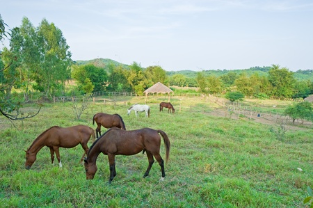 Horses in front of a farm fence surrounded by blue sky