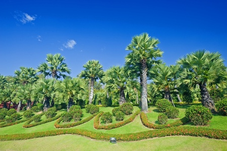 Fine tropical garden with palm trees and flowers