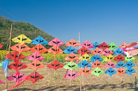 Group of colorful kite and sunflower field in background
