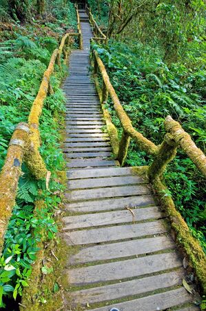 Forest trail Wooden bridge covered with moss , Doi Inthanon national park, Thailand