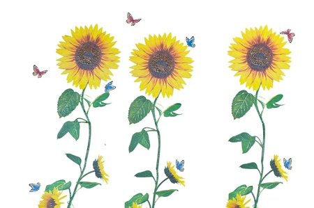 Drawings of sunflower  photo