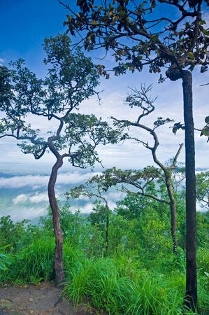 Pa Hin Ngam National Park, Thailand photo