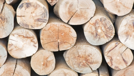 Group of timber Stock Photo - 17093213