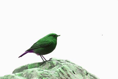 Bird isolated on white background