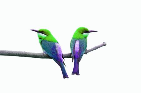 Bird isolated on white background Stock Photo - 17894898