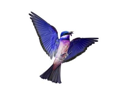 Bird isolated on white background  photo