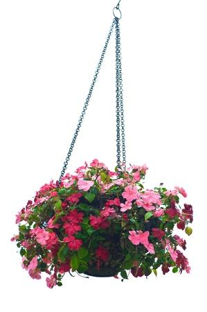 Hanging basket of flowers isolated on white background Stock Photo - 18047317