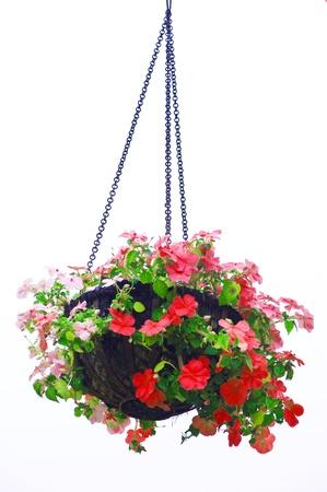basket: Hanging basket of flowers isolated on white background