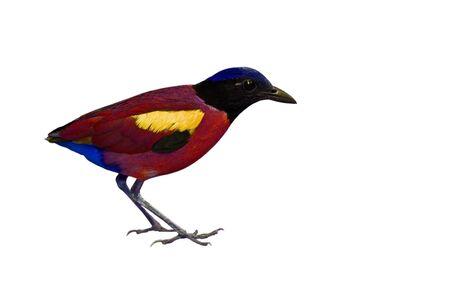 Bird isolated on white background Stock Photo - 18047316