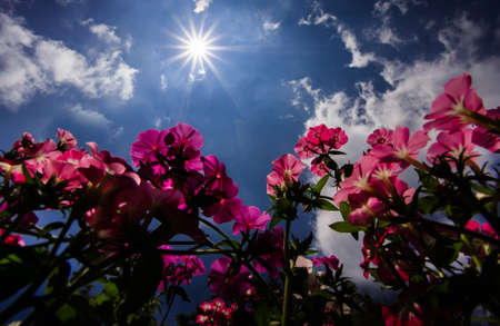cloude: Sun and flowers