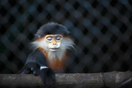 caged: Caged monkey in the zoo
