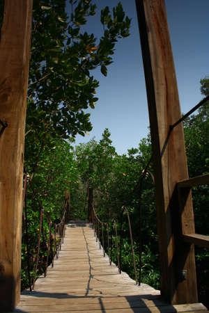 taking the plunge: Wood Hanging Bridge