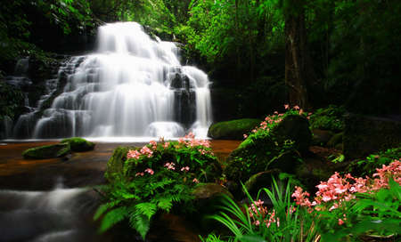 range of motion: waterfall and pink flower
